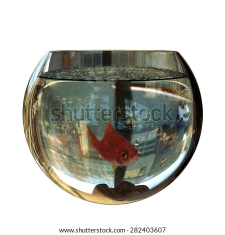 red fish in a glass bowl - stock photo
