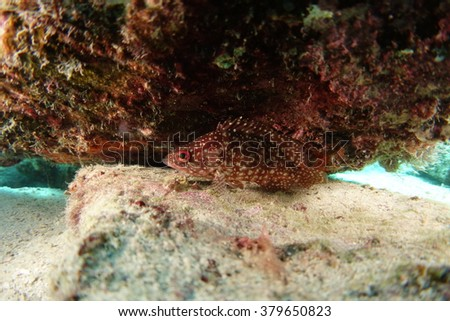 Red fish underwater - stock photo