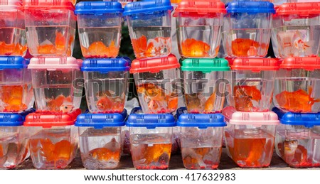 Red fishes  in a small clear plastic boxes - stock photo
