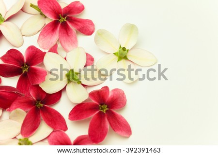 Red flower of name Rangoon creeper or Chinese honey Suckle  on white background, copy space. - stock photo