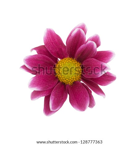 red flower on a white background - stock photo