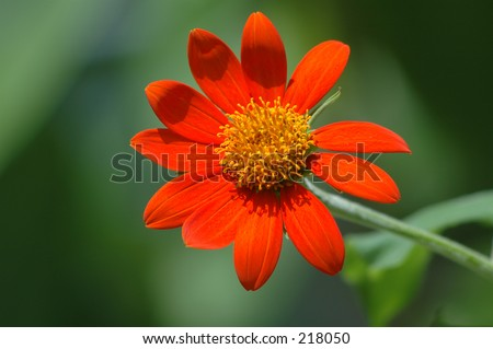Red flower waving hello - stock photo