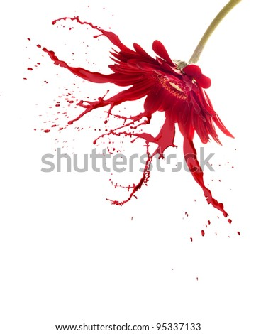 red flower with paint splash on white isolated background - stock photo