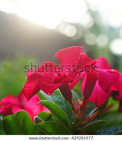 red flower with sunshine  - stock photo