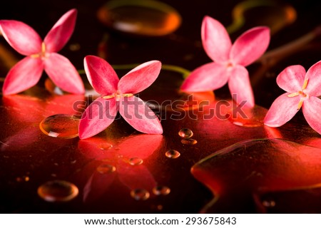 Red flowers and droplets on the surface of copper. Feel freshness spa concept,  studio shot spa and aromatherapy concept - stock photo
