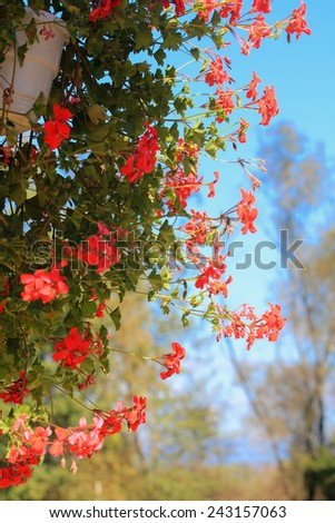 Red flowers as a house decor - stock photo