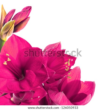 Red flowers, bouquet of gerber - stock photo