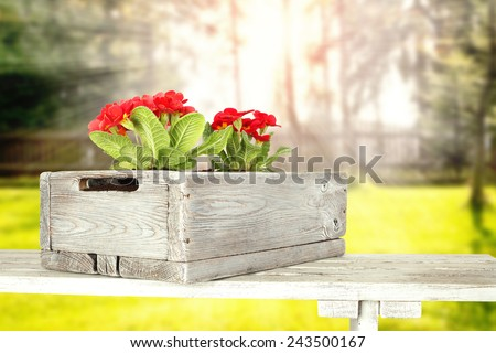 red flowers in box  - stock photo