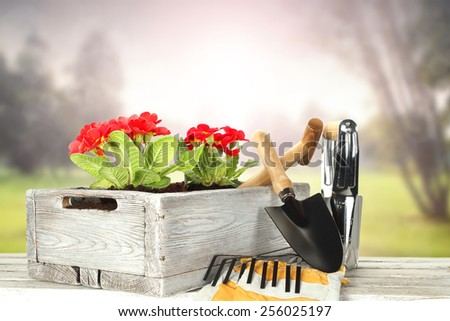 red flowers in wooden pot and tools  - stock photo