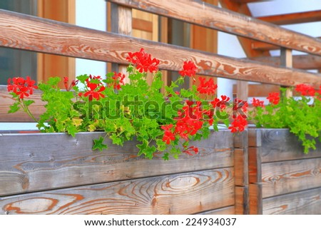 Red flowers in wooden pots decorate traditional house in Cortina d'Ampezzo, Dolomite Alps, Italy - stock photo