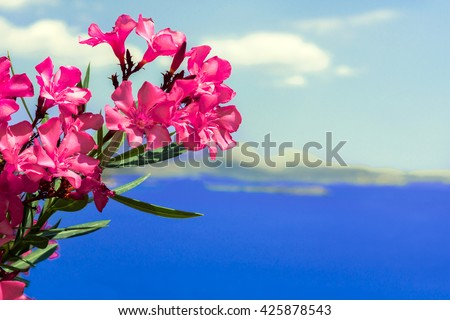 red flowers, sea, sky, island, Greece, Athens, waterfront, great view.beautiful view, with flowers and background of the sea and islands, Greece Location shooting, on the road to Athens Sounion - stock photo