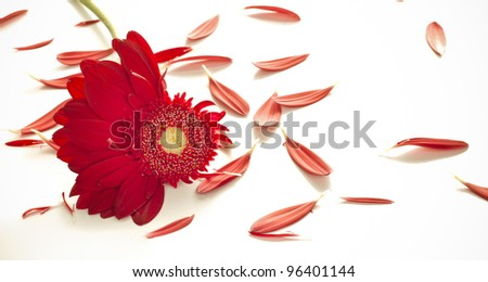 red flowers together on dark colorful background - stock photo
