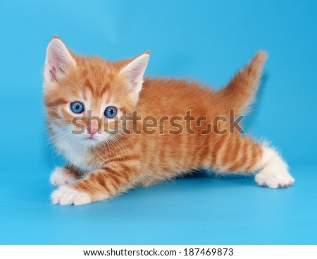 Red fluffy kitten crawling on blue background - stock photo