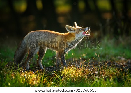 Nimble Stock Photos Images Amp Pictures Shutterstock