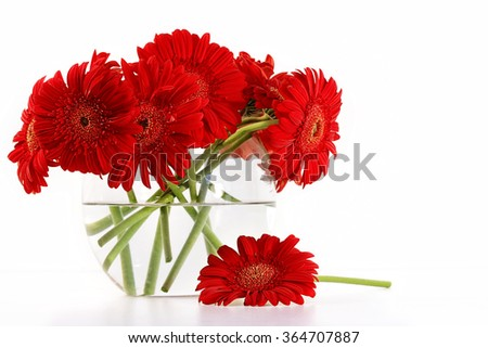 Red gerber daisies in glass vase - stock photo