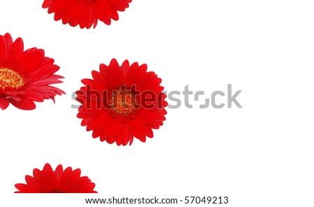 Red gerbera bloom frame - stock photo