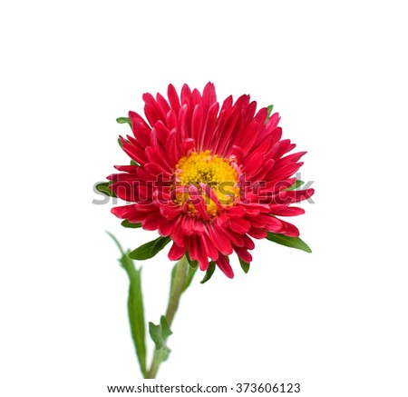 Red gerbera on a bent stem on a white background - stock photo