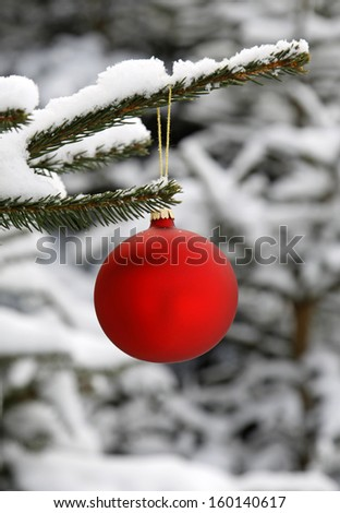 Red glass ball hanging on the snowy twig of the spruce - stock photo