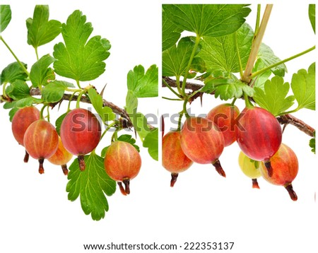 Red gooseberry with green leaves isolated on white. Collage - stock photo