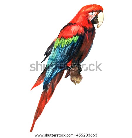 Red green macaw, ara parrot, on branch isolated, watercolor illustration - stock photo