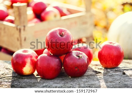 Red group of apples form autumn golden harvest. Organic fruits and colorful fall background - stock photo