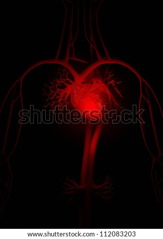 Red heart anatomy     **** Also as footage available in my portfolio - stock photo