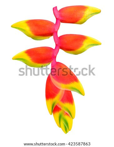 red Heliconia flower on white background. - stock photo