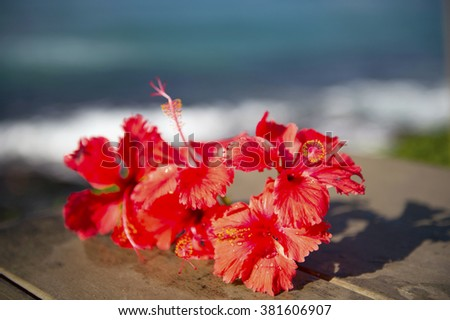 Red hibiscus and the sea-3 - stock photo