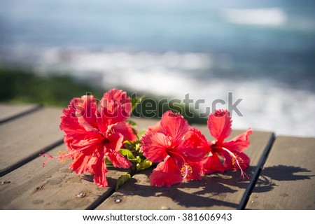 Red hibiscus and the sea-4 - stock photo