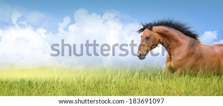 red horse in high summer grass against  sky, banner - stock photo