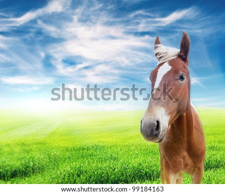 red horse stading in the field looking at camera over cloudy blue sky - stock photo
