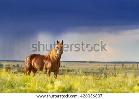 Red horse with long mane in flower field against rainy dark  sky - stock photo