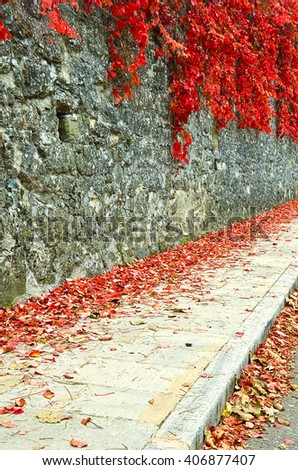 Red ivy on the wall of the building - stock photo
