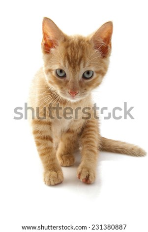 Red kitten close up isolated over white - stock photo