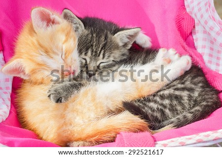 Red kitten embraces a gray kitten. Cats sleeping together. - stock photo