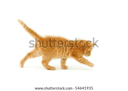 red kitten hunts for ball isolated on white background - stock photo