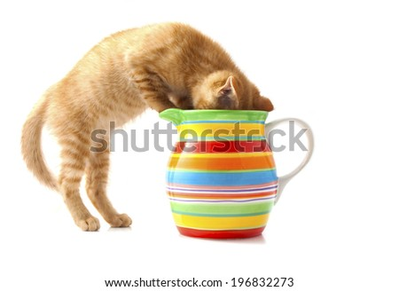 Red kitten in colorful flowerpot isolated over white - stock photo