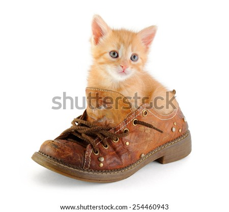 red kitten in shoe, isolated on white background - stock photo