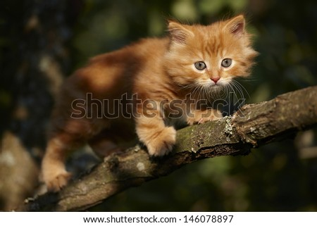 Red kitten on a tree - stock photo