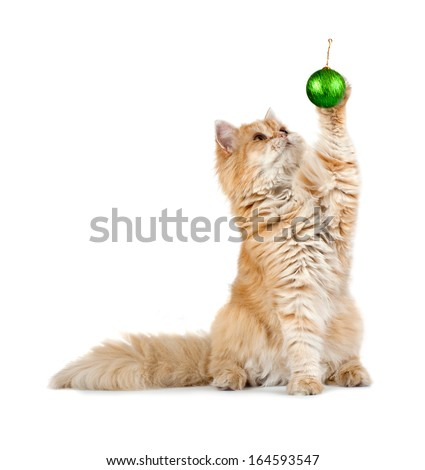 red kitten sitting plays new year's green ball isolated - stock photo