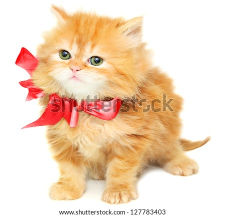 Red kitten with  bow on a white background - stock photo