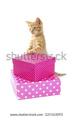 Red kitten with colorful presents isolated over white - stock photo