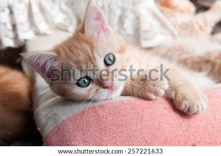 red kitten with green eyes lying on the bedspread - stock photo