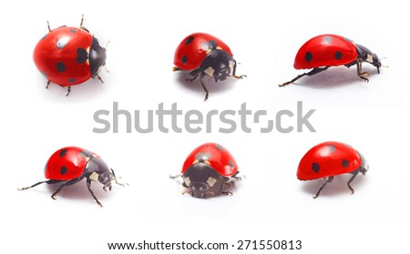 Red ladybug isolated on white background. Closeup - stock photo
