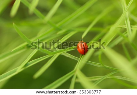 Red ladybug on green grass, Beauty In Nature. - stock photo