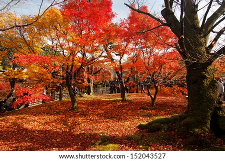 RED LEAF IN JAPAN - stock photo