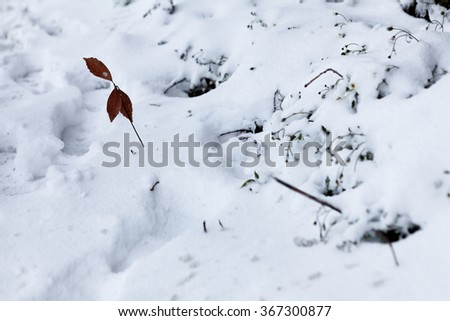 Red leaf on a snow in early winter - stock photo
