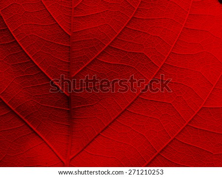 red leaf texture background - stock photo