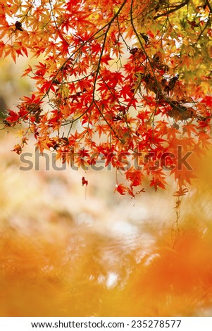 Red leaves in autumn at Japan - stock photo