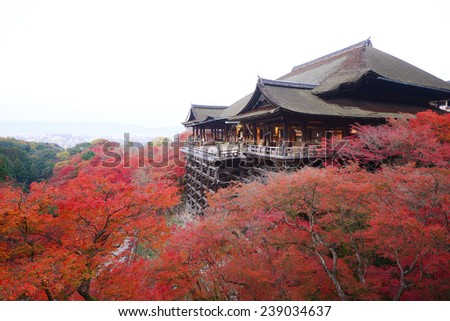 red leaves of fall foliage in a wooden Kiyomizu-dera temple on a hill in kyoto - stock photo